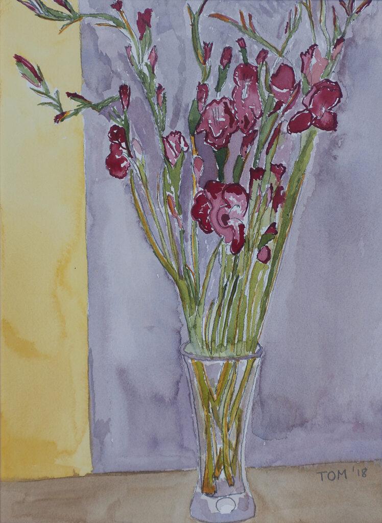 Gladiolus III